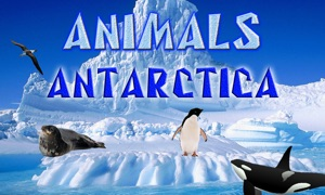 Animals Antarctica