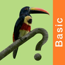 Costa Rica Birds Basic