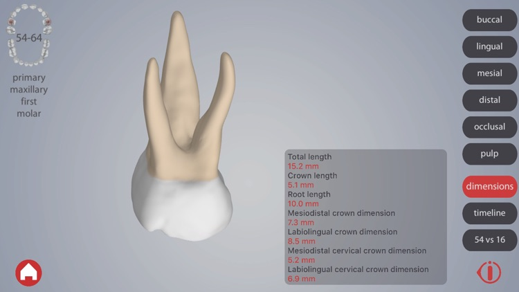 Dental Corpus Primary