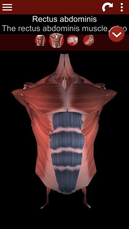 Muscular System 3D (anatomy) screenshot-1