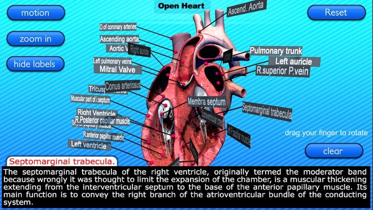 Open Heart Motion