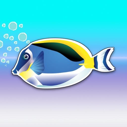 MemoFish!