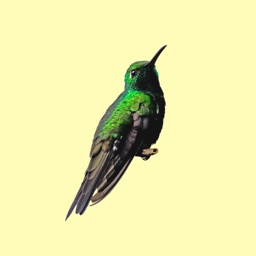 My Hummingbird Stickers