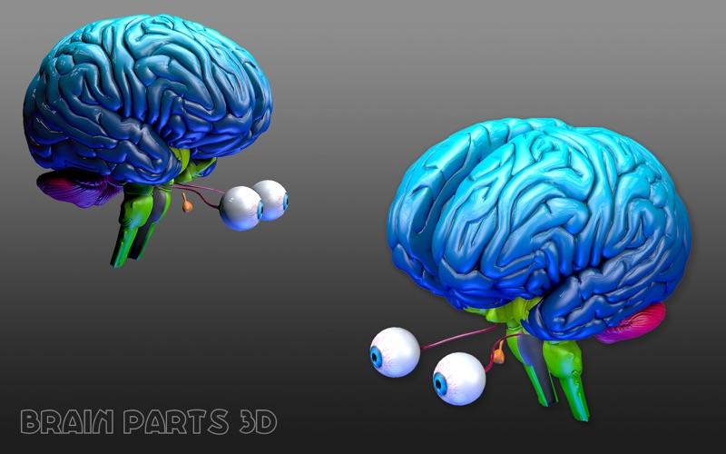 Brain Parts 3D скриншот программы 1