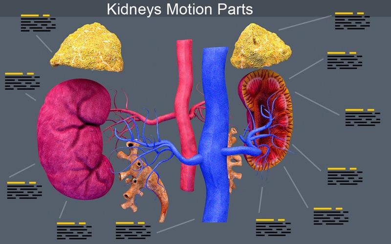 Kidney Motion скриншот программы 1