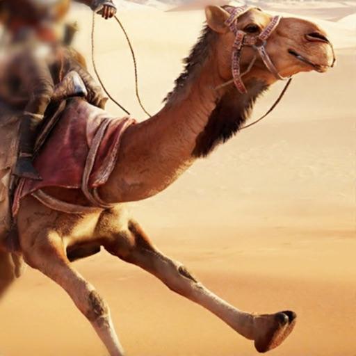 Camel racing dubai betting advice strony podobne do csgodouble betting