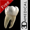 Dental Patient Education Lite - iPadアプリ