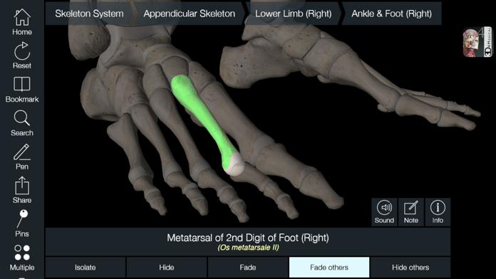 Essential Skeleton 4 Screenshot