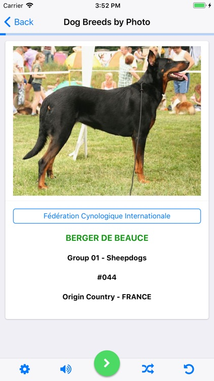Dog Breeds Recognized by FCI