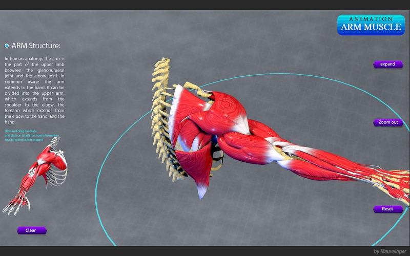 Arm Muscles Motion скриншот программы 3