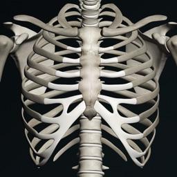 Bones 3D (Anatomy)