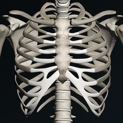 Кости человека 3D (анатомия)