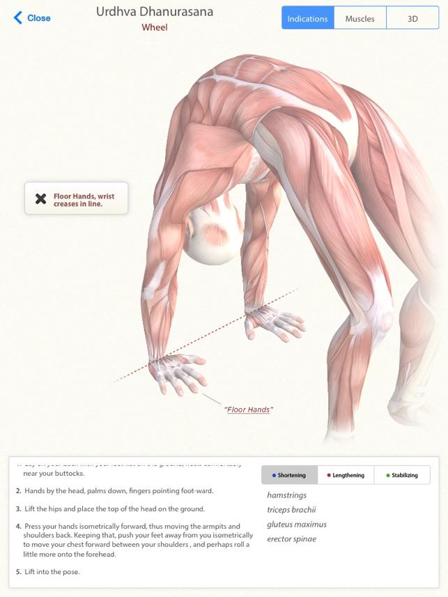 3D Yoga Anatomy Lite on the App Store