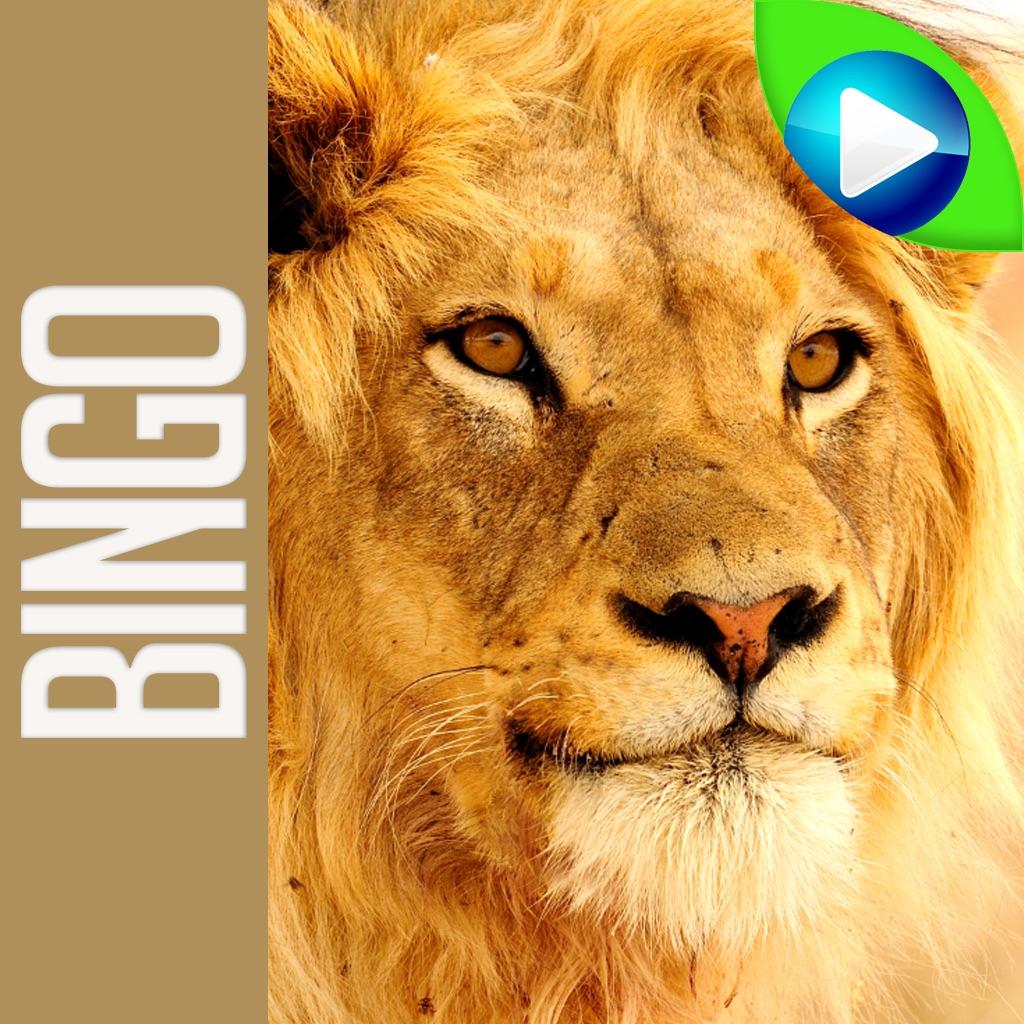 ANIMAL BINGO - Live Animal Bingo & Slots! hack