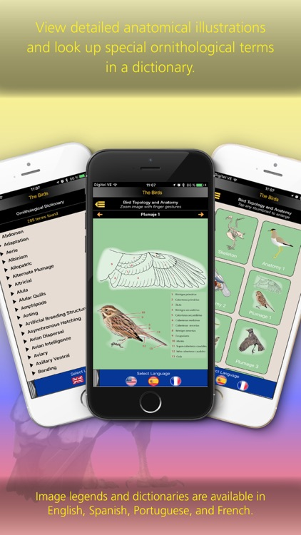 The Birds of Colombia screenshot-3