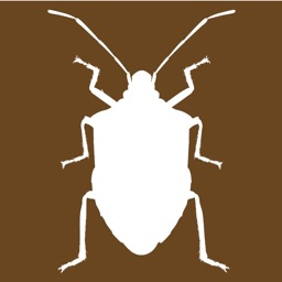 Midwest Stink Bug