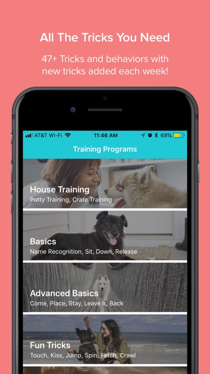 Paws Dog Training & Tricks by modernfit