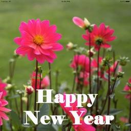 Amazing New Year Greetings