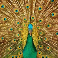 Codes for Amazing Birds Puzzles Hack
