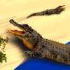 鳄鱼模拟器攻击3D