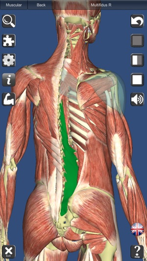 Visual Muscles 3D Screenshot