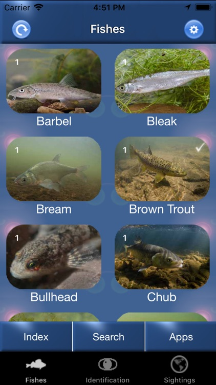 Fish Id - Freshwater Fish UK
