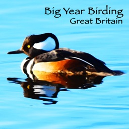 Big Year Birding GB