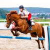 Horse Jumping Skills