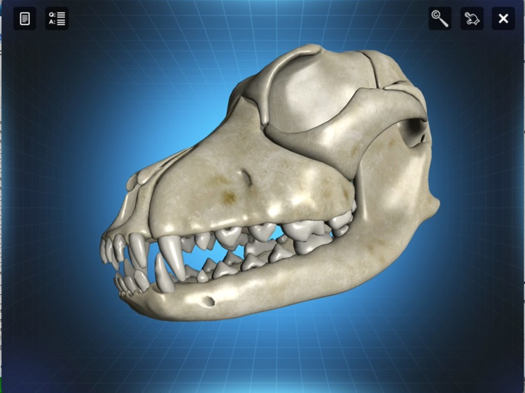 Bone Viewer: Dog Skull screenshot-4