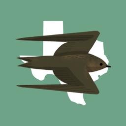 Texas Birds Sticker Pack