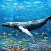 Blue Whale Survival Challenge
