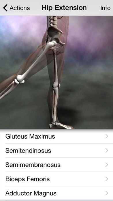Learn Muscles review screenshots
