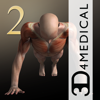 3D4Medical.com, LLC - iMuscle 2 - iPhone Edition artwork