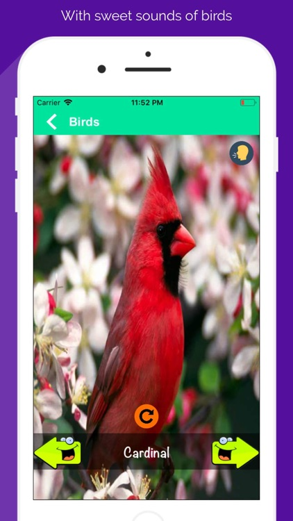 150+ Animal Sounds Lite screenshot-4