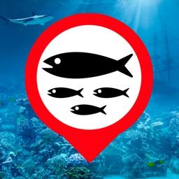 Fish Where