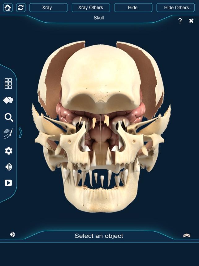 My Skull Anatomy on the App Store