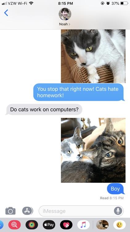 Junie the Cat