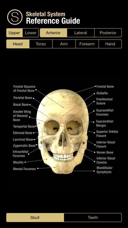 Human Skeleton Reference Guide screenshot-0