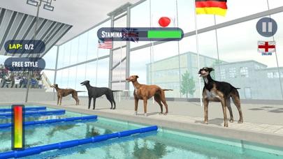 犬のスイミングレースのおすすめ画像1