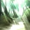 Raymee! - 光のあふれる幻想的なフィルター