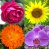 花 - 美しい植物についての植物のクイズ - iPhoneアプリ