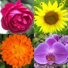 Flores: Quiz das belas plantas icon