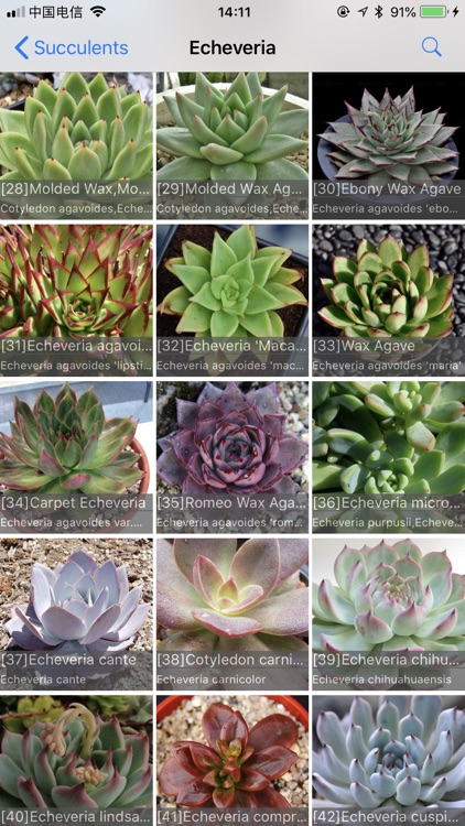 Succulents screenshot-3
