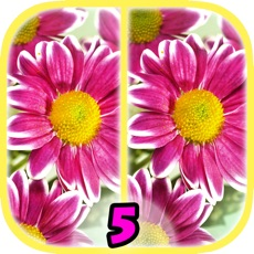 Activities of Find Differences 5
