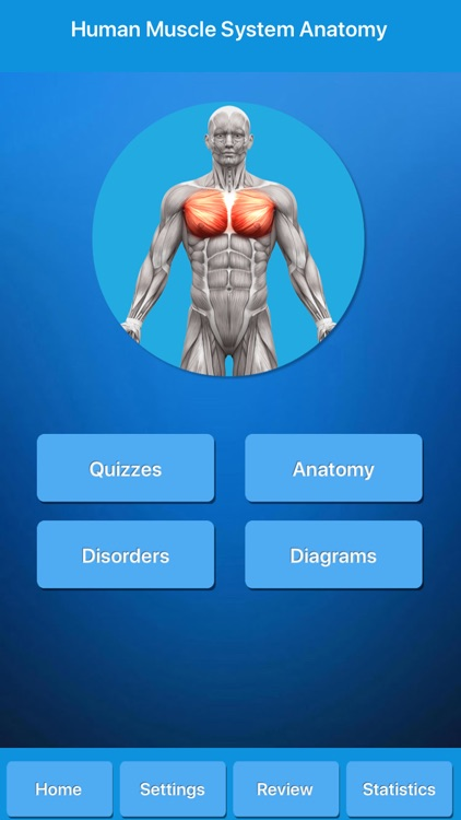 Muscle System Anatomy