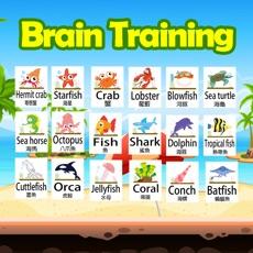 Activities of Brain Training