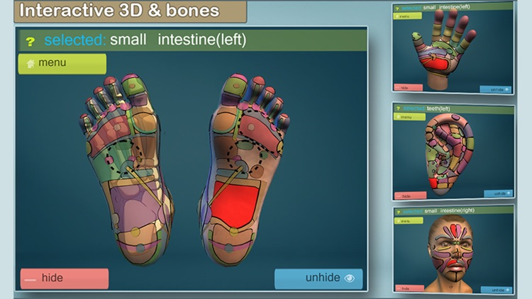 Total Reflexology-3D screenshot-4