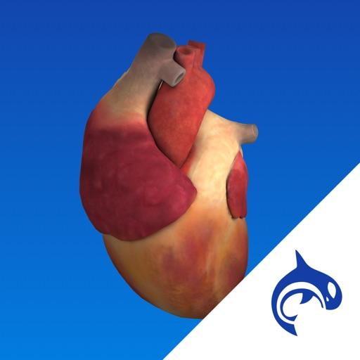 Heart Decide - Education & Engagement
