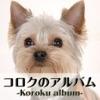 コロクのアルバム(犬の写真集)