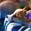 幸せの犬育成ゲーム3Dアイコン
